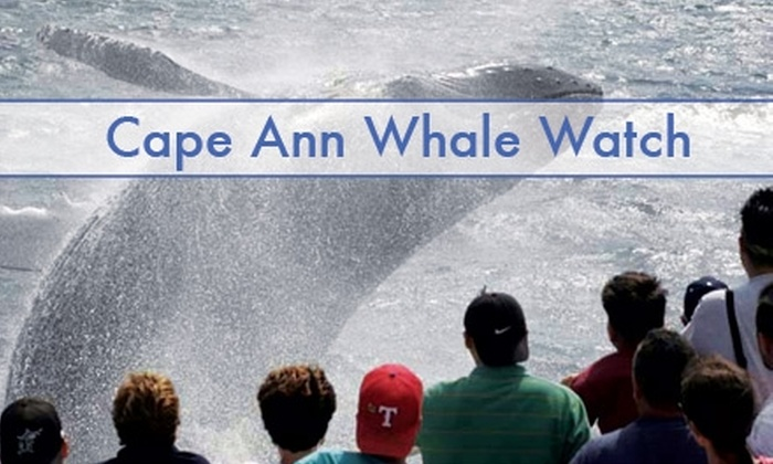 Cape Ann Whale Watch - Gloucester: $25 Ticket to a Whale-Watching Journey at Cape Ann Whale Watch ($45 Value)