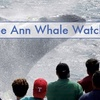 44% Off Whale-Watch Tour