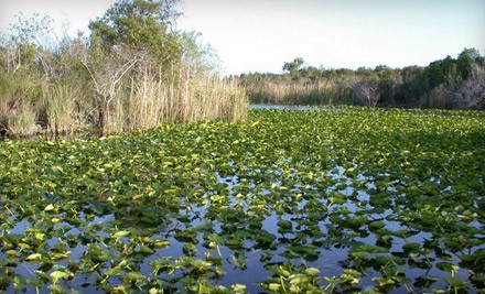 Everglades Holiday Park - Everglades Holiday Park in Fort Lauderdale