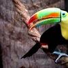 Half Off at Mesker Park Zoo and Botanic Garden