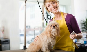 Petimage Grooming Salon & Spa: Grooming Package a Small, Medium, or Large Dog at Petimage Grooming Salon & Spa (Up to 53% Off)