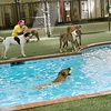 Up to 53% Off Pet-Care Services