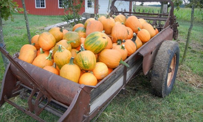 Renyer's Pumpkin Farm - Dell: Pumpkin-Patch Outing for Two or Four at Renyer's Pumpkin Farm