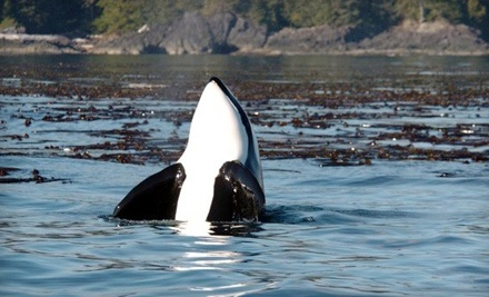 The Whale Centre: Bear-Watching Tour - The Whale Centre in Tofino