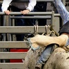 Half Off Two Puyallup Pro Rodeo Entries
