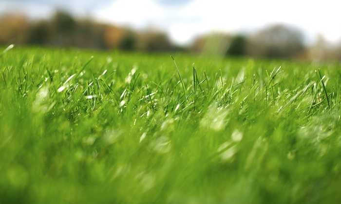 Weed Man Lawn Care - Newnan: Weed-Control and Crabgrass Treatment with Optional Slow-Release Fertilizer from Weed Man Lawn Care (75% Off)