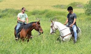 חוות סוסים תעוז: רכיבת סוסים בחוות תעוז הפסטורלית: רק 79 ₪ לטיול סוסים בן 75 דק' באזור היפהפה, בליווי מדריך מנוסה