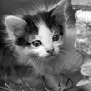 $10 Donation to Help Fund Foster-Kitten Care Packages
