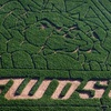 Half Off Corn-Maze Outing at P Bar Farms in Hydro