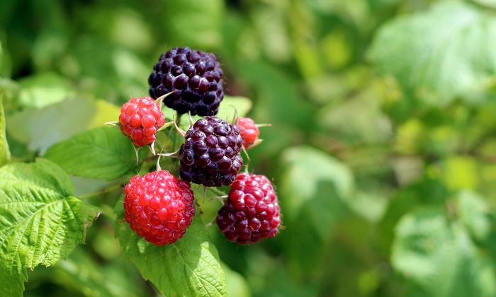 Nature Tour with Foraging Expert - Lafayette Community Park: Learn About Wild Edible Plants with a Foraging Expert