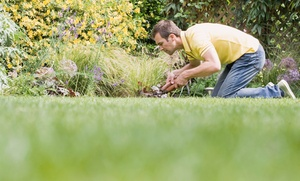 Texas Sprinkler Works: $34 for $75 Worth of Services at Texas Sprinkler Works