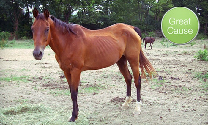 Equine Rescue League of Southern Indiana - Louisville: $10 Donation to Help Fence Horse Pasture