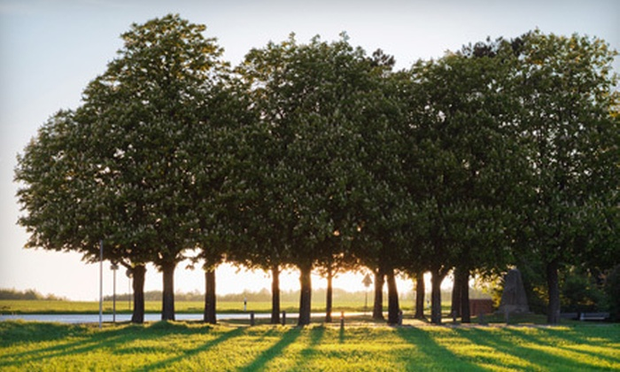 Texas Tree Team - Morrell Park: Arborist's Evaluation and a Deep-Root Feeding for One, Two, or Three Trees from Texas Tree Team (Up to 70% Off)