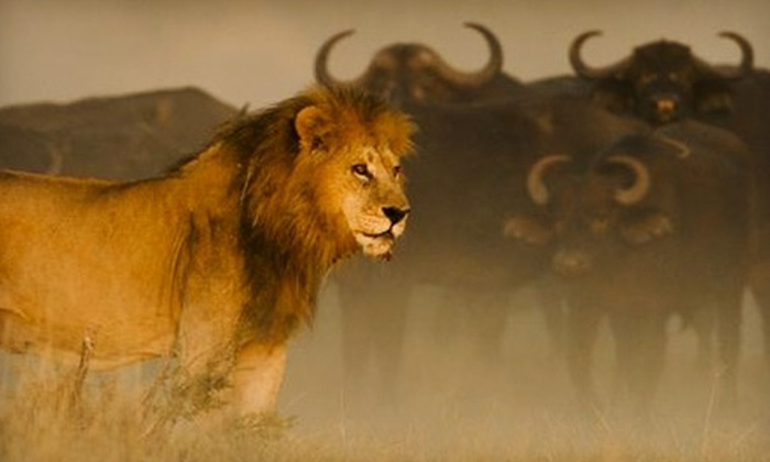 """National Geographic's """"The Last Lions"""" - Bloomfield Hills: $5 for Admission to National Geographic's """"The Last Lions"""" in Bloomfield Hills (Up to $9.25 Value)"""