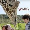 Half Off at Wildlife Safari in Winston