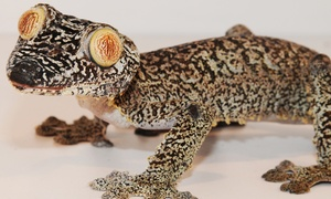 Underground Reptiles: Products at Underground Reptiles (Up to 53% Off). Two Options Available.
