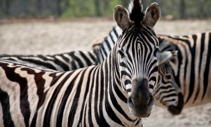 Niabi Zoo - Coal Valley: $10 for a Family Four-Pack of Tickets to the Niabi Zoo in Coal Valley ($22 Value)