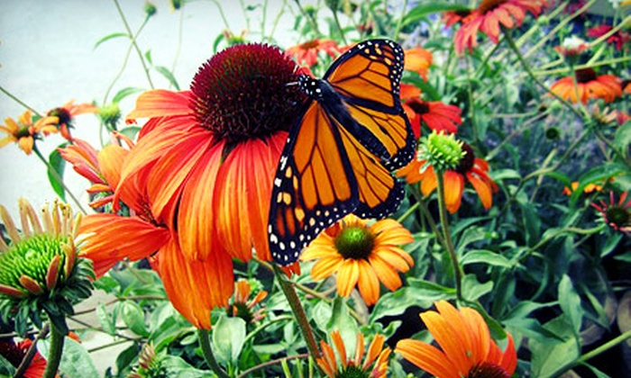 Budd Gardens - Blackburn Hamlet : C$15 for C$30 Worth of Perennials and Hostas at Budd Gardens