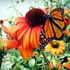 50% Off Perennials and Hostas at Budd Gardens