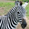 Up to 51% Off at Boulder Ridge Wild Animal Park