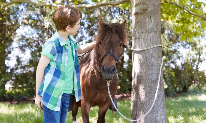 Land of Little Horses Farm Park - Gettysburg: $20 for Two Admissions at Land of Little Horses Farm Park ($31.90 Value)