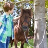 Up to 42% Off Pony Ride Packages from Pony Adventures