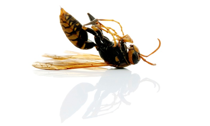 Proshot Pest Control - Houston: $38 for a Home Interior and Exterior Pest-Control Treatment from Proshot Pest Control ($100 Value)