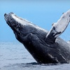 Up to Half Off Whale-Watching Adventure