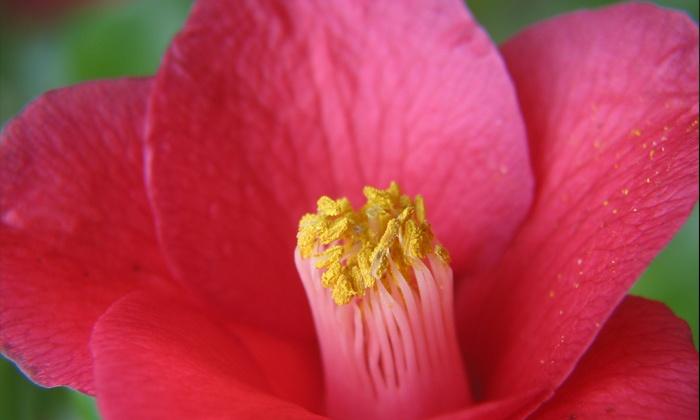 Quarryhill Botanical Garden - Glen Ellen: Visit for Two or Four to the Quarryhill Botanical Garden (50% Off)
