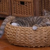 Woven Pet Bed with Pillow