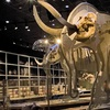 Western Science Center – Up to Half Off Admission