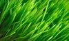 Weed Man Lawn Care - Middleburg Heights: $25 for a Full-Lawn-Fertilization Treatment from Weed Man Lawn Care (Up to $58.75 Value)