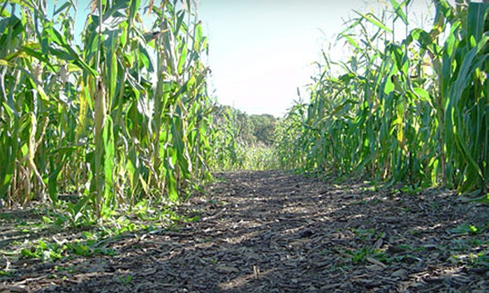 Bowers Farm Corn Maze - Bloomfield Hills: Corn-Maze and Pumpkin-Patch Admissions for Two, Four, or Eight at Bowers Farm Corn Maze