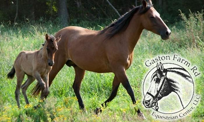Gaston Farm Road Equestrian Center - Richburg: $10 for a Horseback Trail Ride at Gaston Farm Road Equestrian Center