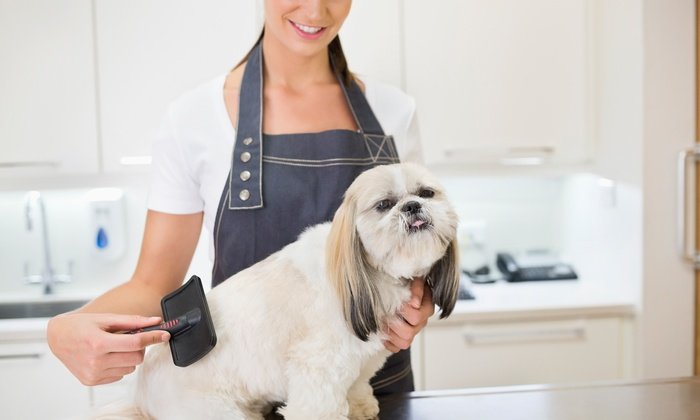 Sweet Pea Pet Spa - Englewood: Grooming Services from Sweet Pea Pet Spa (59% Off)