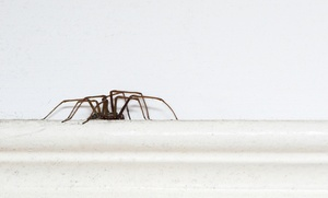 Allstatewide Pest Control: $39 for an Interior and Exterior Insect Extermination from Allstatewide Pest Control ($95 Value)