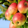 Up to 70% Off Fruit Trees
