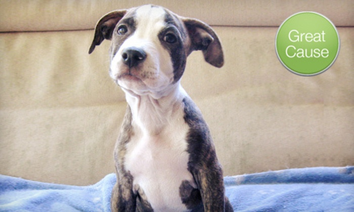 Louie's Legacy Animal Rescue - Cincinnati: $10 Donation to Help Fund Puppy Vaccinations