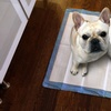 AKC Puppy Pads (150 Count)