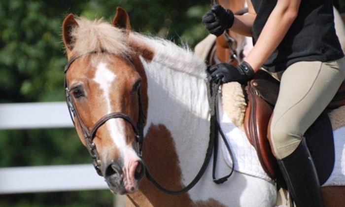 CNY EQ - De Witt: One, Three, or Five Private One-Hour Horseback-Riding Lessons at CNY EQ in DeWitt (Up to 65% Off)
