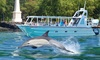 Hang Loose Boat Tours - Honokohau Harbor -North Side: Snorkel Tour or Dolphin Swim for One, Two, or Four at Hang Loose Boat Tours (Up to 41% Off)