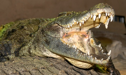 C$8 for a Reptile-Zoo Visit at Reptilia (Up to C$15 Value)