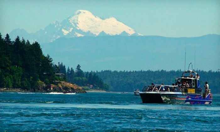 Deception Pass Tours - Whidbey Island: Whale-Watching Tour for One or Two from Deception Pass Tours (Up to 53% Off)