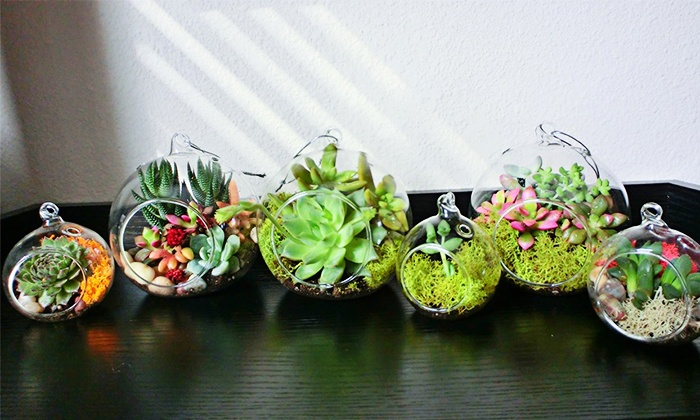The Cute Plants - Houston: Succulent Plants and Lucky Bamboo at The Cute Plants (50% Off). Two Options Available.