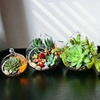 50% Off Succulent Plants and Lucky Bamboo at The Cute Plants
