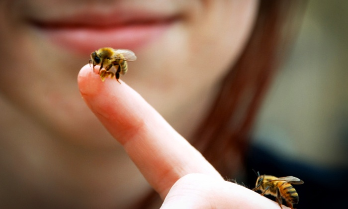 Honeybee Centre - Surrey: Visit for Four to the Bees & Bugs Lab With Optional Tea at Honeybee Centre (Up to 53% Off)