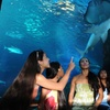 Up to 29% Off at Maui Ocean Center