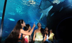 Maui Ocean Center: Maui Ocean Center Visit and Lunch for One Child, Adult, or Senior