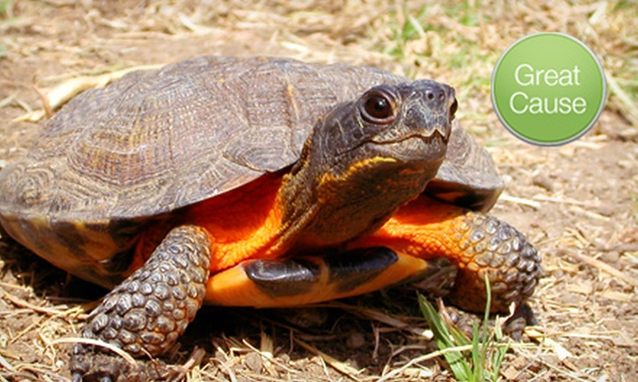 American Tortoise Rescue - American Tortoise Rescue: $10 Donation to Turtle Hospital