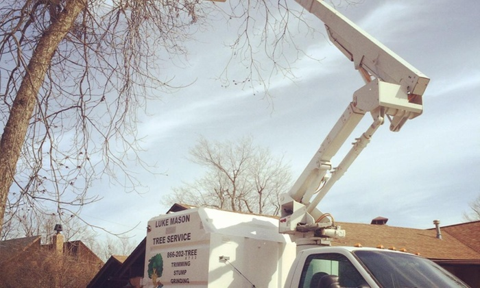 L.m. Tree Service - Albuquerque: $113 for $225 Worth of Tree-Trimming Services — L.M. Tree Service